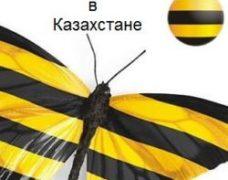 Тарифы Билайн в Казахстане: многообразие выгодных предложений